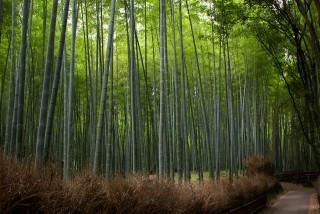 竹林の道の写真