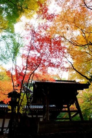 長楽寺の写真
