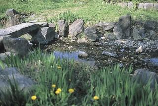 江川の湧水の写真