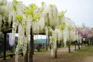 和気神社の写真