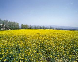 生駒高原の写真