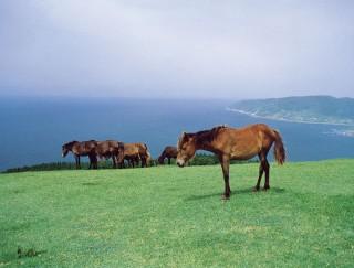 都井岬の写真