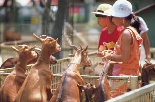 宮崎市フェニックス自然動物園の写真