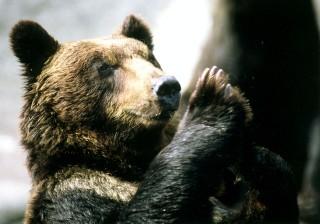 のぼりべつクマ牧場の写真