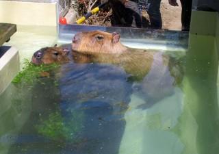 狭山市立智光山公園こども動物園の写真