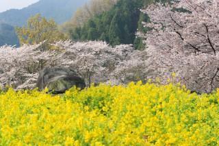 石舞台古墳(明日香村)の写真
