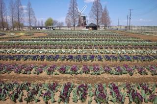 あけぼの山農業公園の写真