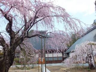 常楽寺(中野市)の写真