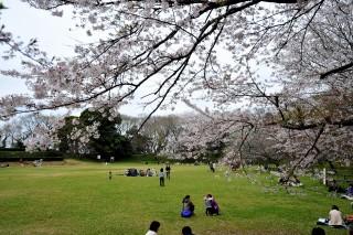 佐倉城址公園の写真