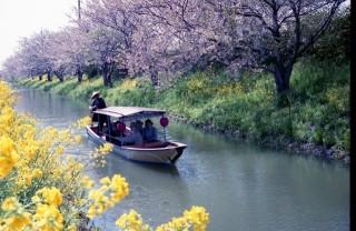 近江八幡水郷めぐりの写真
