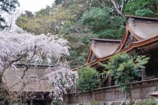 吉野水分神社の写真