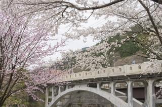 渡良瀬橋の写真