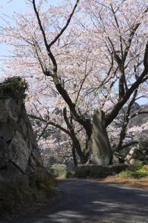 鳥羽城跡の写真