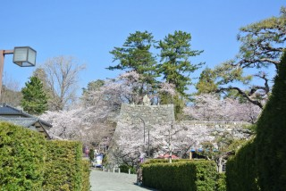 松坂城跡(松阪公園)の写真