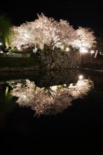 田丸城跡の写真