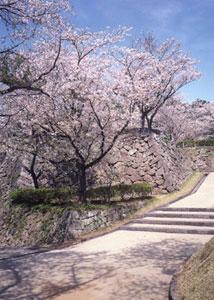 延岡城跡 城山公園の写真