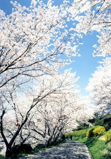 日輪寺公園の写真