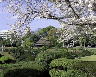 水前寺成趣園の写真
