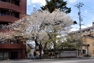 松月寺の写真