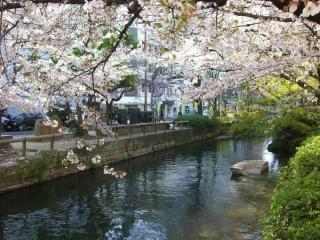 西川緑道公園の写真