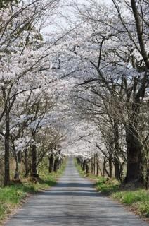 茅部神社の写真