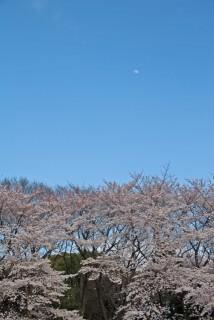 駒場公園の写真