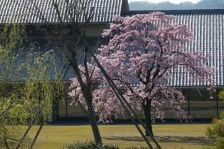 富山県水墨美術館の写真