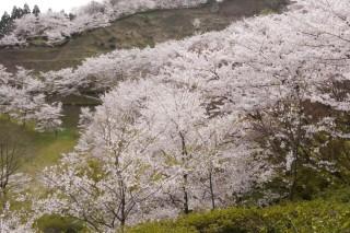八尾城ヶ山公園の写真