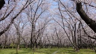 庄内緑地公園の写真