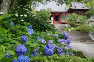 矢田寺(金剛山寺)の写真