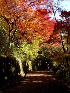 城山公園(岐阜)の写真