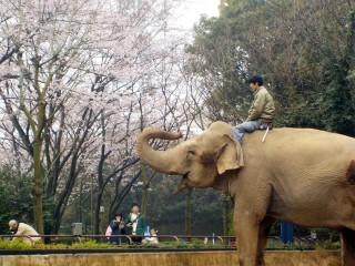 横浜市立金沢動物園の写真