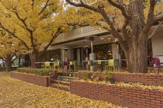 神宮外苑銀杏並木の写真