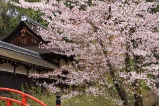 下鴨神社の写真
