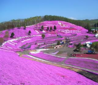 東藻琴芝桜公園の写真