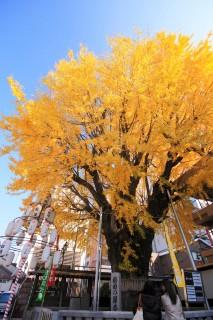 櫛田神社(櫛田の大銀杏)の写真
