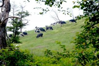 大笹牧場の写真