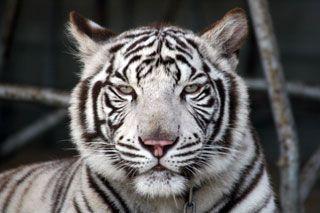 しろとり動物園の写真
