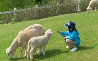 六甲山牧場の写真