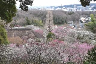 京王百草園の写真