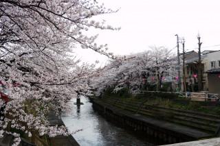 いたち川公園の写真