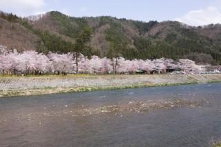 桜野公園の写真