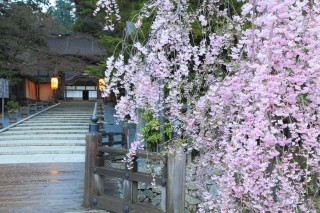 高野山金剛峯寺の写真
