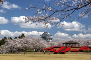 天ヶ城公園の写真