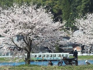 若桜鉄道の写真