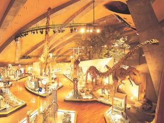 群馬県立自然史博物館の写真