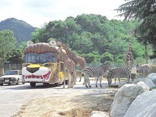 群馬サファリパークの写真