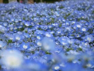 浜名湖ガーデンパークの写真