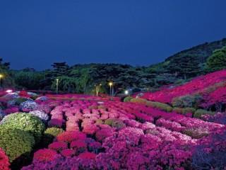 小室山公園の写真