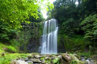 桜滝の写真